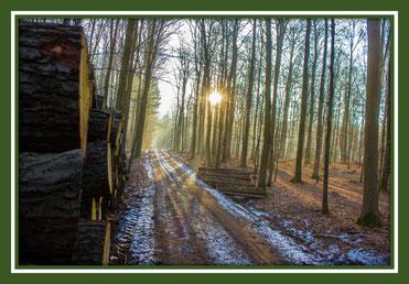 Forst, Forstimmobilien, Wald kaufen, Wald verkaufen, Forst kaufen, Forst verkaufen, Wald investieren