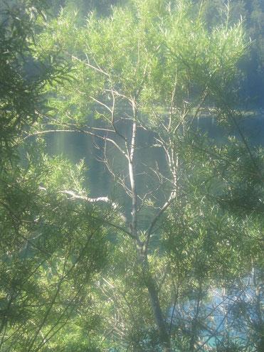 Baum vor dem Erlaufsee