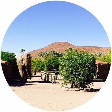 Ein Elefant kommt ins Dorf (Foto: Antje Kosubek)