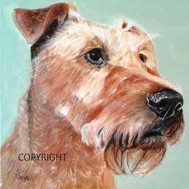 Hundeporträt, Hundeportrait, Tierporträt, Tierportrait, Irish Terrier