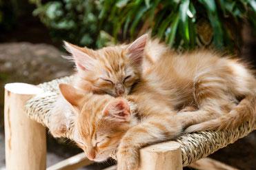 Katze Erstausstattung Katze - Immer zwei Katzen halten