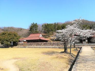 備前焼と桜のコラボ