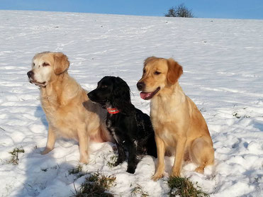 Mein kleiner Schatz wie schnell wirst du erwachsen!!! Hunde sind mein Leben geworden und ich freue mich sehr auf die Trainings mit Fly!!!