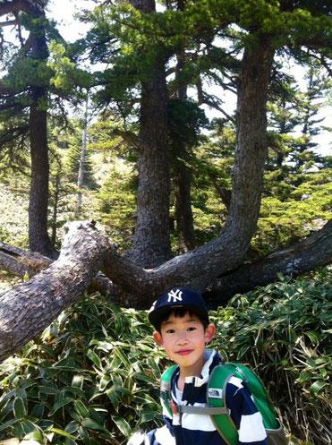 有名な写真スポット。                                           この松、一本の木からタコの足みたいに分かれています。後ろに見えてる木も同じ幹からの! 哲平は2回目なのでノリノリで奥さんに色々と説明&道案内。