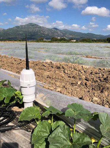 agralis, sentek, sonde capacitive, humidité du sol, All-in-One
