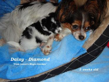 Mami Balis mit Daisy-Diamond 5 Wochen jung