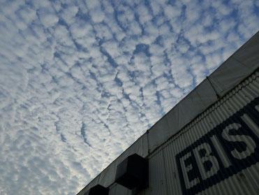 ふと見上げたら、頭上一杯のうろこ雲