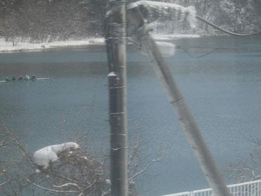 吹雪の阿賀川で漕艇練習中!