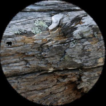 Holz ist ein einzigartiger nachwasender Rohstoff. Wir verarbeiten ausschlisslich luft getrocknetes Schweizer Holz