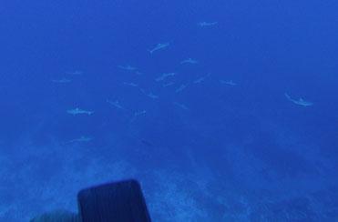 Quand les requins surgissent