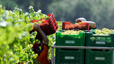 D.O.リアス・バイシャス2013年収穫 (www.vinetur.com)