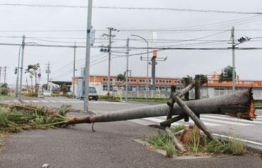 台風17号の影響で街路樹が倒木する被害があった。信号機も止まっていた=27日午後、真栄里