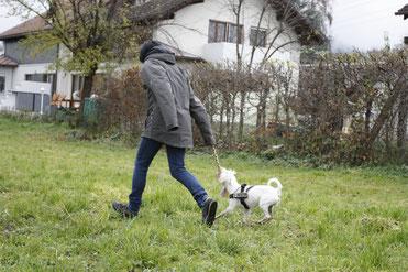 Hund spielt, Assistenzhund, Therapiebegleithunde, Assistenzhunde, zertifizierte Assistenzhunde, Hundeschule
