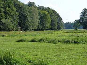 Die grüne Wiese wird extensiv bewirtschaftet, da dieses deutlich nachhaltiger ist und die Artenvielfalt deutlich fördert. Im Hintergrund grenzt sie an den Wald des Naturschutzgebiet (NSG) Magdeburgerforth. Hier weiden Pferde und Schafe.