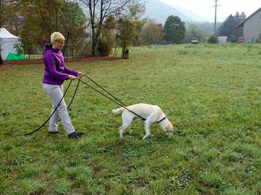 Fährten mit dem Hund