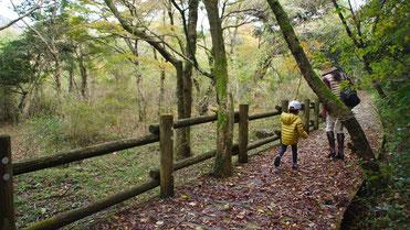 約1時間の林間遊歩道