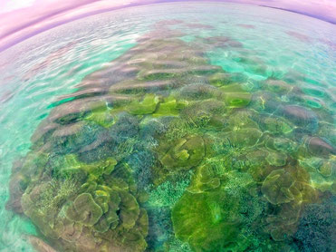石垣島の完全少人数制ダイビングショップTAKUDIVE