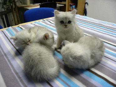 das Quartett von Sissy 9. Sept. 2013