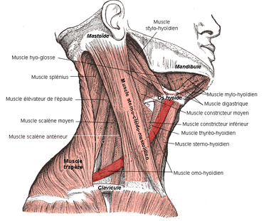 Cervicalgies, torticolis, et qi gong/do-in