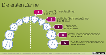 In dieser Reihenfolge bekommt Ihr Baby seine Zähne (© www.kindergesundheit-info.de)