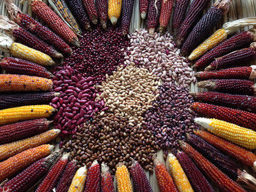 Diversity of maize and bean seeds