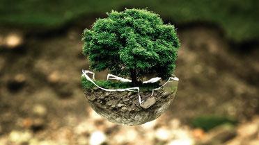 Ökologisches Gleichgewicht