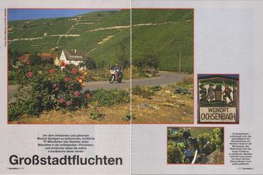 """Weinberge bei Mundelsheim am Neckar. In schweren """"Butten"""" wird die Lese mit einer Zahnradbahn nach unten gefahren."""