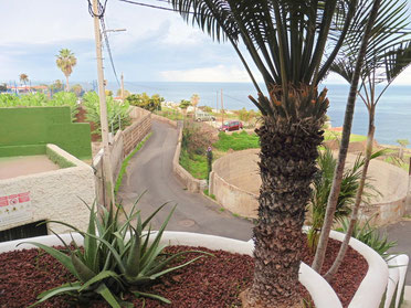 Palmen vor dem Haus