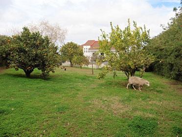 Garten hinter dem Haus