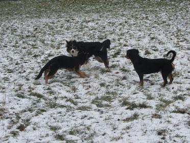 Drei anspruchsvolle Hunderassen