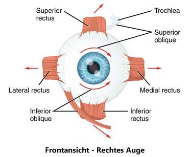 Augenbewegungen
