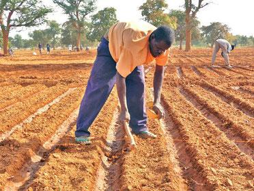 Devenir manœuvre agricole