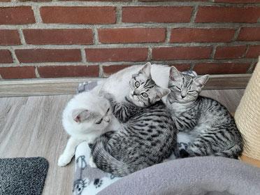 Davina mit Henry und Hannes!