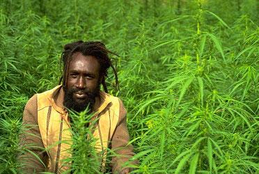 ganja jamaica, legalizacion jamiaca