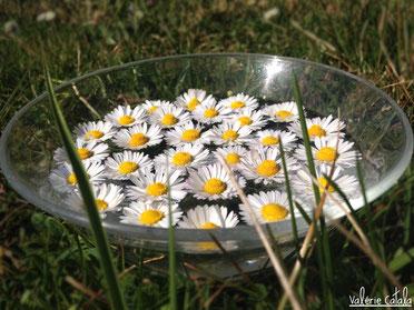 soins naturels plantes fleurs de bach élixir floral pâquerette stress apaisement émotions