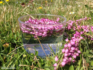 soins naturels plantes fleurs de bach élixir floral de bruyère heather stress apaisement émotions