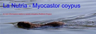 la nutria - myocastor coypus