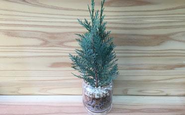 杉のチップ活用したインテリアグリーンです