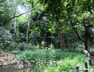 下池には草が生い茂り、シオカラトンボが羽を休めていました