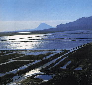 El Parque Natural de la Marjal de Pego y Oliva se encuentra en el litoral situado entre las provincias de Valencia y Alicante, tiene una extensión de casi 1300 hectáreas.