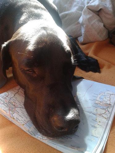 Schottland_Skye_Die Roadies_Wohnmobil_Hund_Reisetagebuch