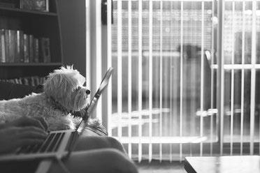 Le chien et le miroir d'auto-reconnaissance