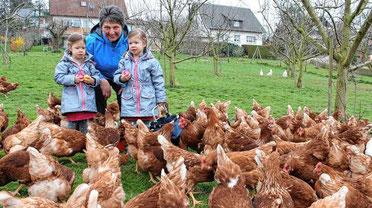 Eierkauf direkt bei den Hühnern: Bächlehof Bottenau