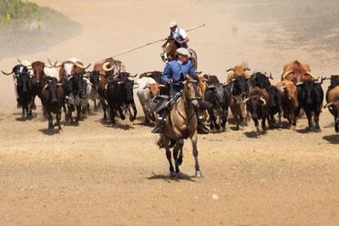 Die Arbeit der Rinderhirten erleben