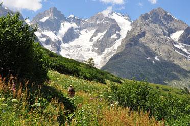 Mégaphorbiaie du Lautaret avant le sentier des crevasses.