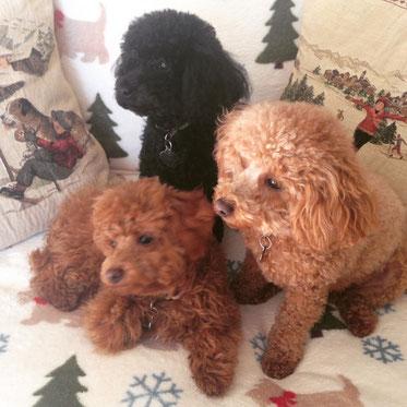 Voici 3 petites soeurs adoptées par la même famille...  tous des bébés de Léa de 3 portées différentes ... Sissy, Molly et Heidi