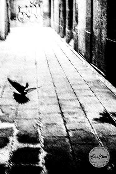 Barcelone, street photography, noir et blanc, black and white, belgique, art, travel