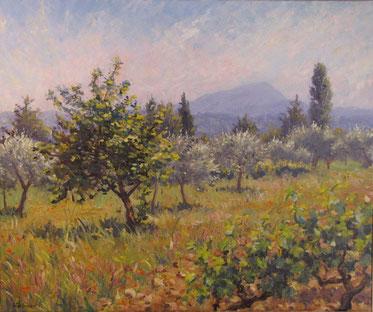 Tony Wahlander (Wåhlander) Devant le Grand Bessillon s'étale la vallée de Tavernes avec ses champs d'oliviers et de vignes