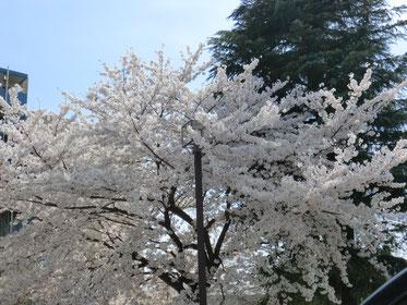 事務所側の氷川神社にて