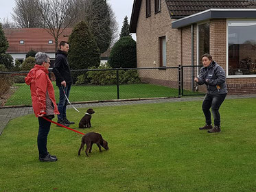 Puppy training in eigen tuin, Loosbroek, privé les, dog-coach